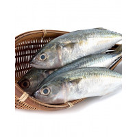 INDIAN MACKEREL WHOLE (AYALA) 1kg(frozen)